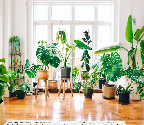 plants for interior color