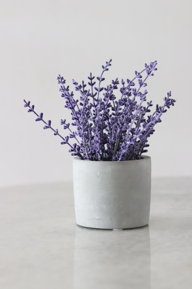 lavender houseplant interior design