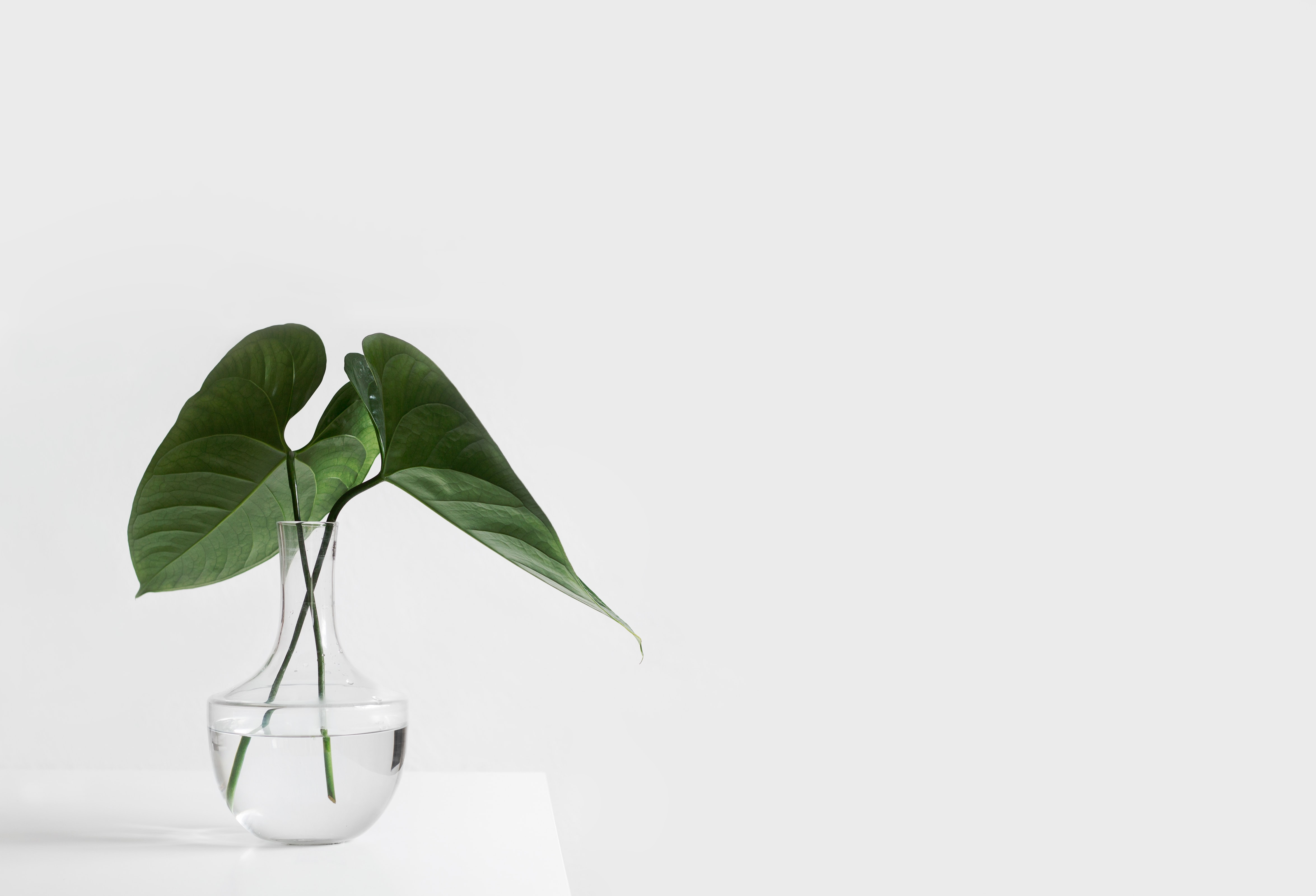 Home Office Plants for Working from Home