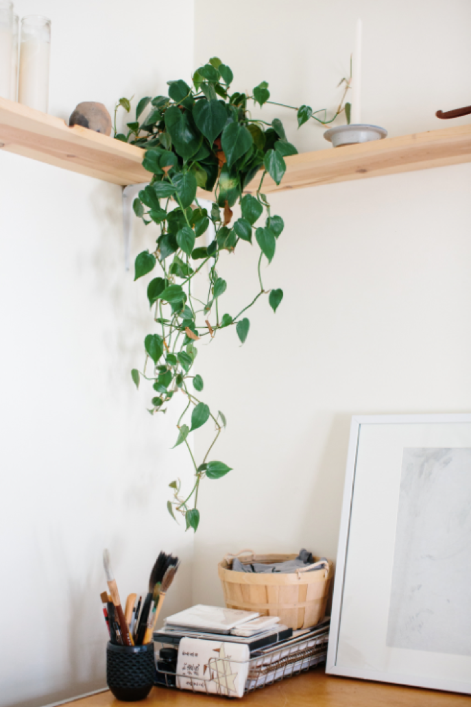 greenery in a home office